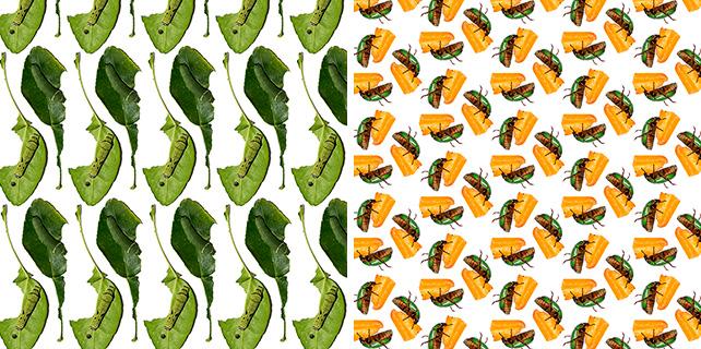 left: Ernest Goh, Pattern Lime Butterfly, caterpillar on leaves, Papilio demoleus malayanus right: Ernest Goh, Pattern Green Chafer Beetle, Anomala albopilosa