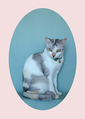 Liana Yang, what my pussy loves – hidey 01, 2013, Archival Photoprint in Diasec, 60 x 90cm, 3 + 1AP