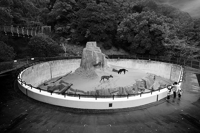 Robert Zhao, Singapore Wild Dogs – From the series Singapore 1925-2025, 2014, Archival Piezographic Print in frame, 121 cm x 84 cm