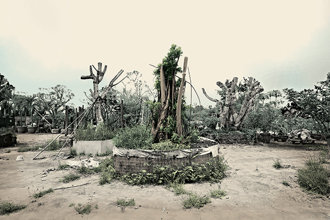 Robert Zhao Renhui, Substation Malayan Banyan, 2015, Image courtesy of artist and 2902 Gallery