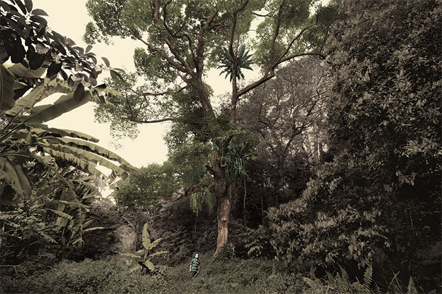 Singapore, Very Old Tree - Durian Tree, Bukit Panjang, 2015 by Robert Zhao. Collection of the National Museum of Singapore