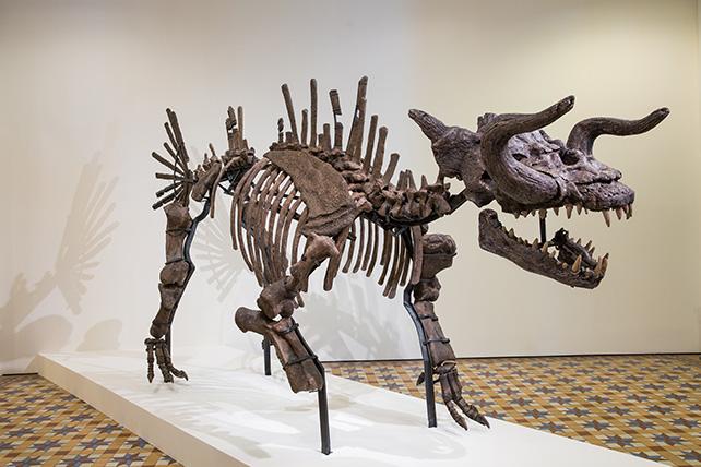 Tan Zi Hao, The Skeleton of Makara (The Myth of a Myth), 2016, Image courtesy of Singapore Art Museum
